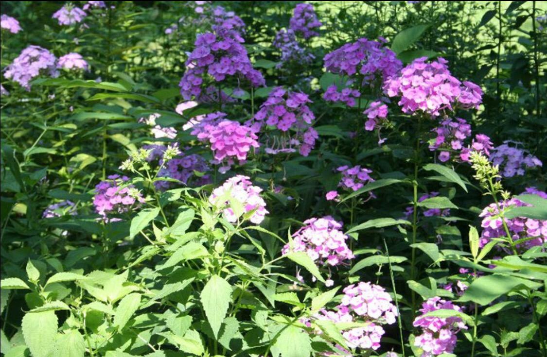 gardening in america: myhobby – myjourney
